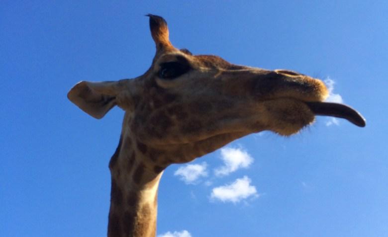 Зоопарк използва краудфъндинг, за да превърне животинска тор в енергия